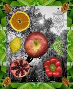Tu B'Shevat images = Fruits, veggies, nuts, trees, tallisim, & kabbalah, etc
